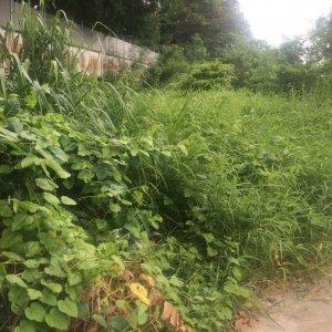 Земельный участок № 130 на Пхукете
