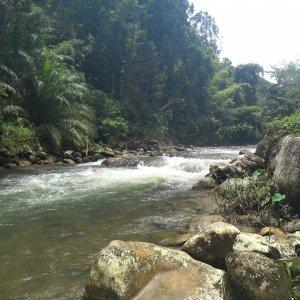 Rafting in the tropics