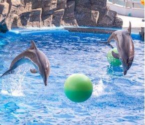 Дельфинарий Пхукета