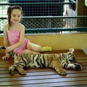 Экскурсия в царство тигров на Пхукете