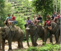 Экскурсия на слонах