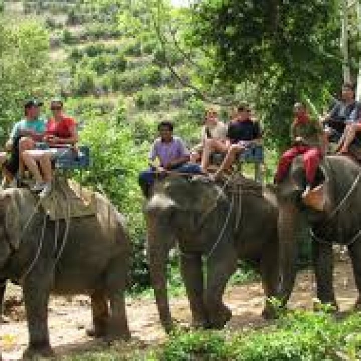 Экскурсия на слонах на Пхукете 2020-2021 год
