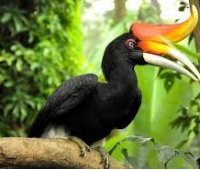 Парк птиц Пхукета