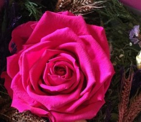 flowers №73