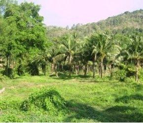Land plot number 19