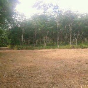Земельный участок № 51 на Пхукете