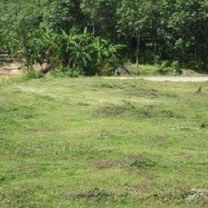 Земельный участок № 73 на Пхукете
